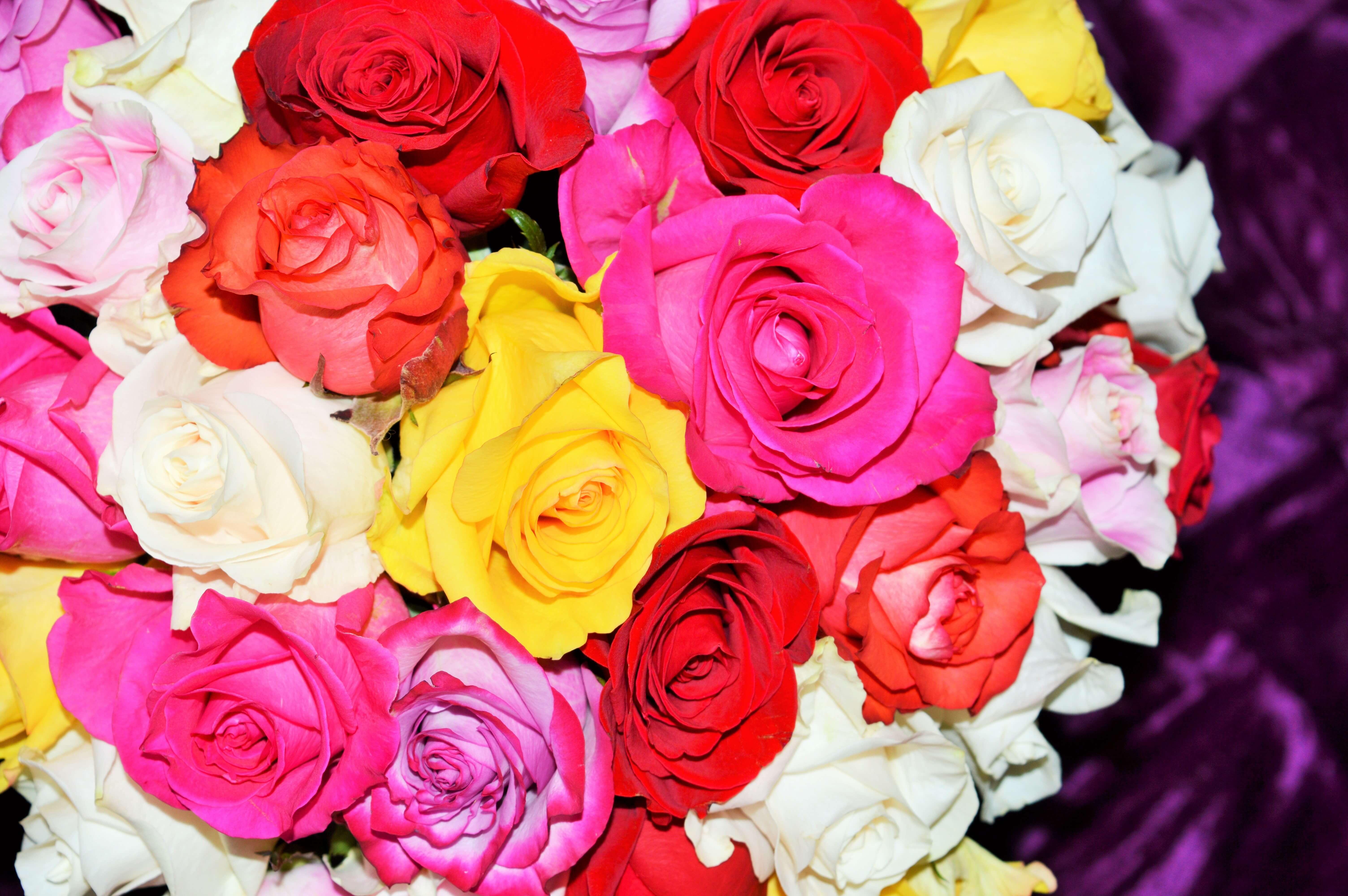 F tes sp ciales fleuriste la rose d 39 art for Fleuriste rose